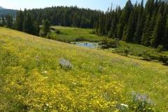 flower_field1