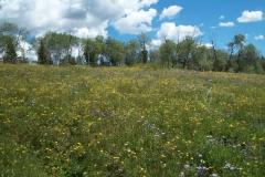 flower_field2